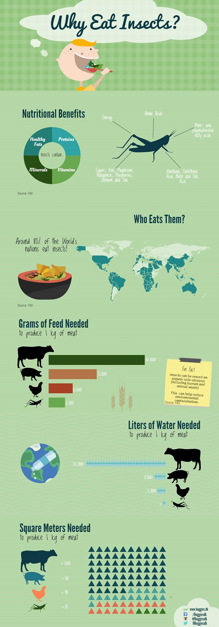 Buggies Infographic - Why eat insects - Small